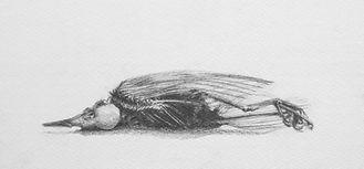 Dead Robin   15cm x 28cm Allison Neal.JPG