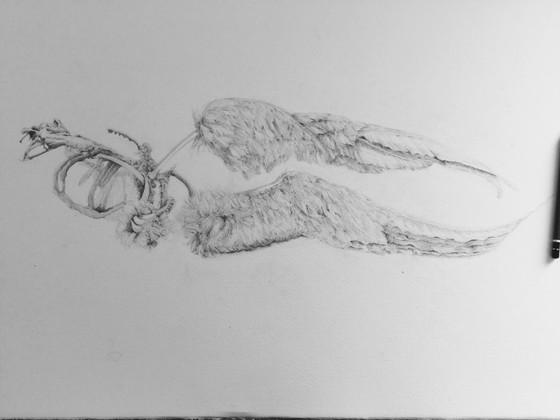 Wings of a dead gull