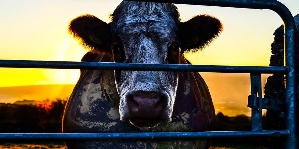 Movie Night: Cowspiracy