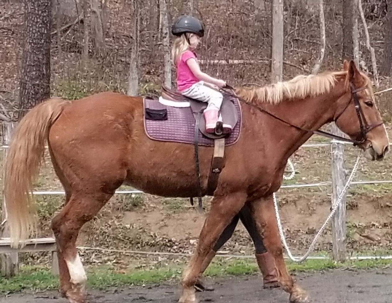 Horse training packages