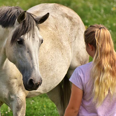 Das Pferd widersetzt sich? Die Nadeltherapie bringt Hilfe bei schmerzhaft bedingten Verhaltens-Störungen. Für volles Vertrauen.