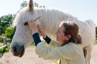 Good vibrations: Pferd und Reiter mit Klängen entspannen und stärken
