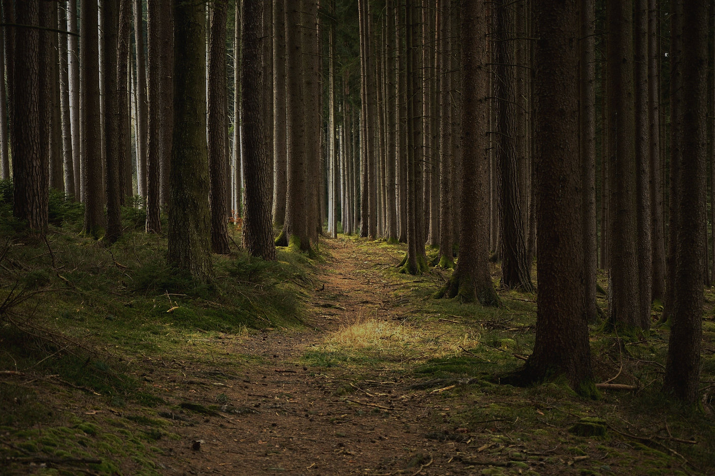Tree Planting Memberships