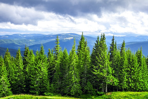 Thirty Trees
