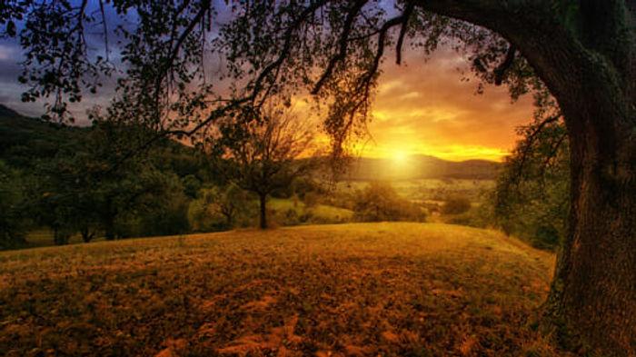 nature-3125912-500x280.jpg