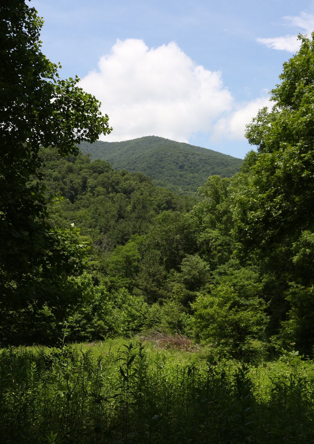 Lickstone Bald from Beneath the Treehouse