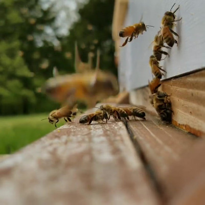 Hard at work!#bees #beekeeping