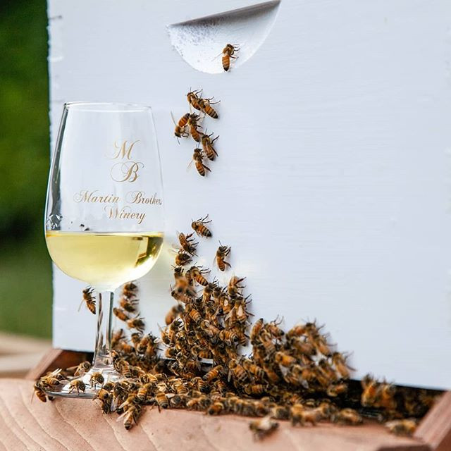Honey Bees with the Honey Wine