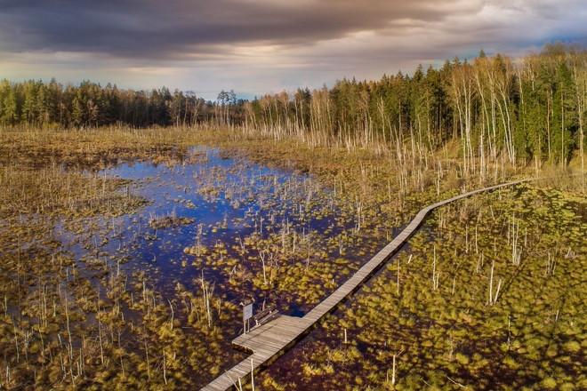 Image of Dubrava Marsh Reserve