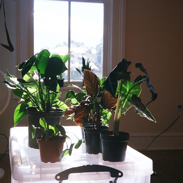 plants getting nutrients