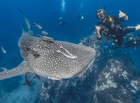 Diving with Whale Sharks in the Similan Islands