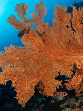 Dive Sites in the Andaman Sea