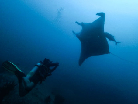 When to Dive the Similan Islands to See Manta Rays