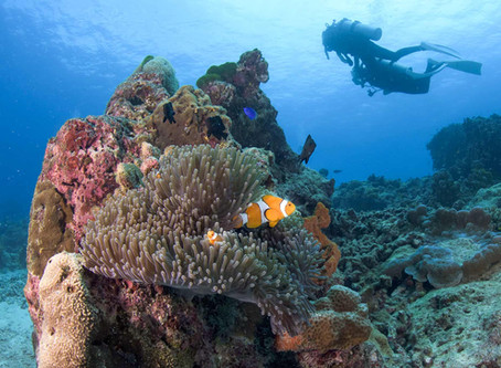 About The Similan Islands and Surin Islands