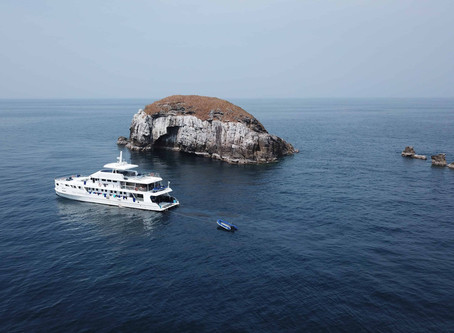 5 Great Reasons to Dive the Similan Islands, Surin Islands and Myanmar in Low Season
