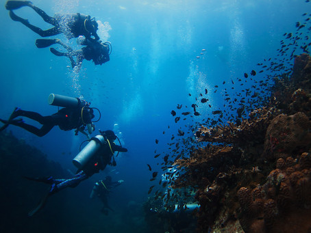 Diving in Koh Tao: Top dive sites