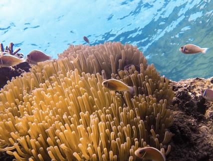 coral kohtao