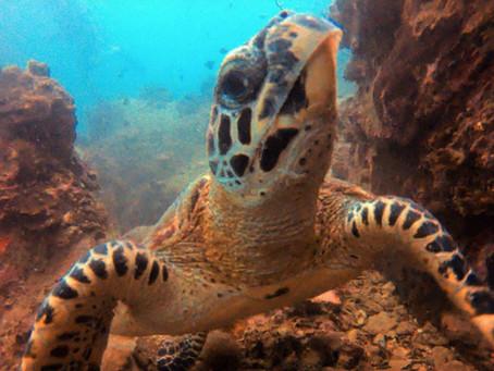 Responsible diving, responsible living