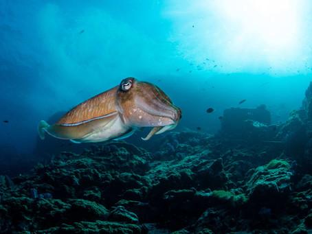Marine Life in the Similans, Surins and Mergui Archipelagos