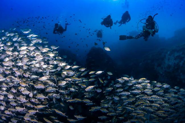 diving samui