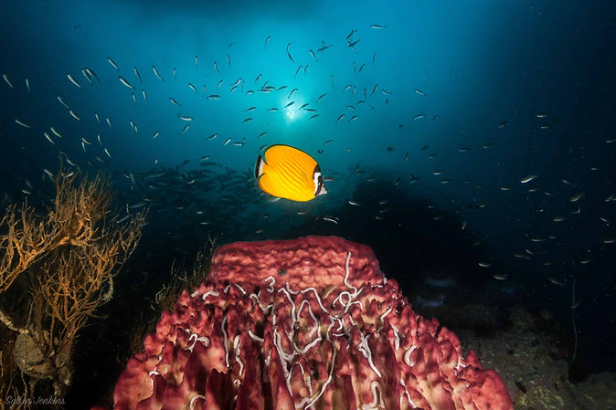 6 Reasons to go Night Diving on Koh Tao