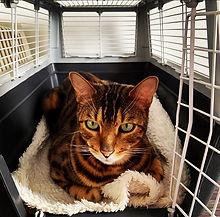ew-katzencoach-Transportbox.jpg