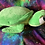 Thumbnail: Crush - personalised turtle