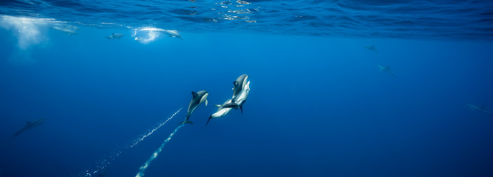 Dolphins matin