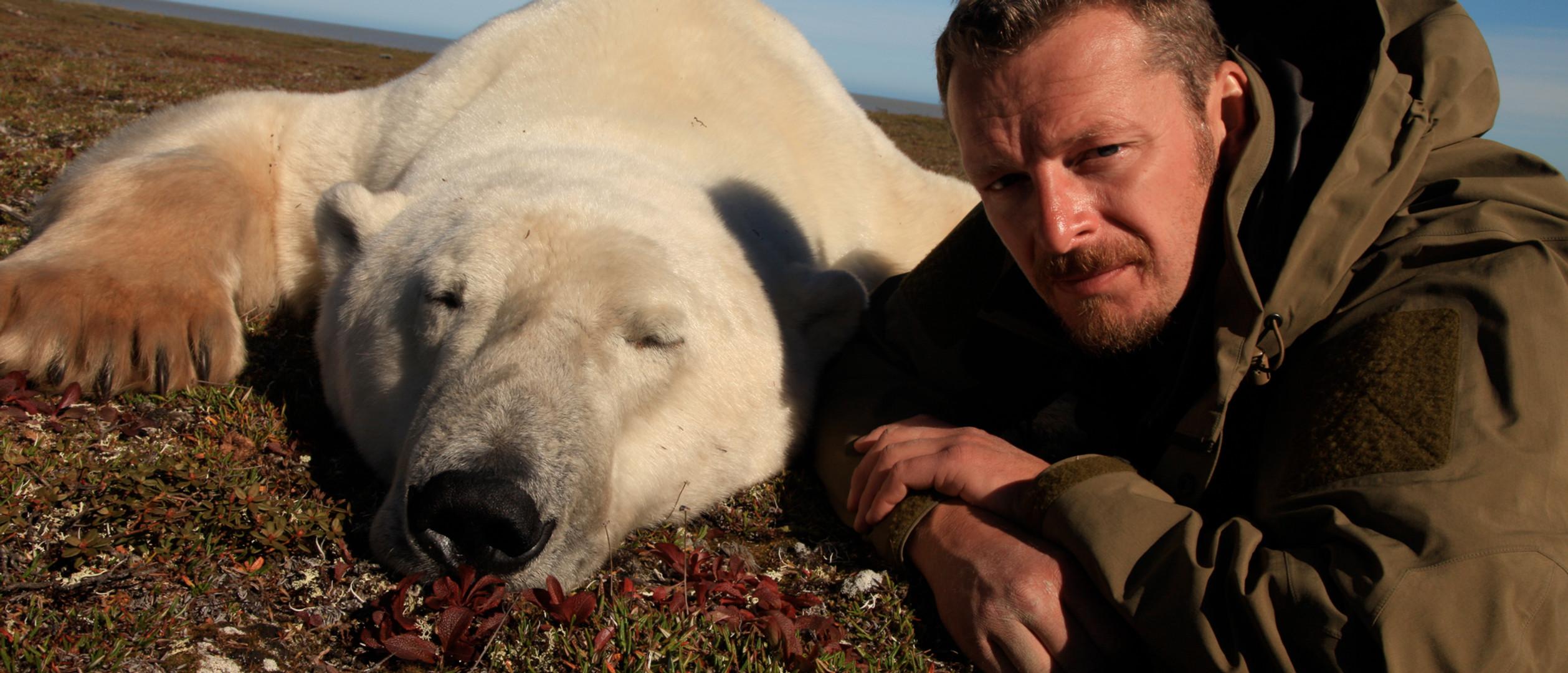 # tranquilized polar bear by dean cannon