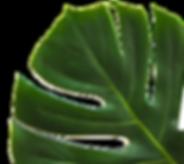 leaf np bckgrnd.png