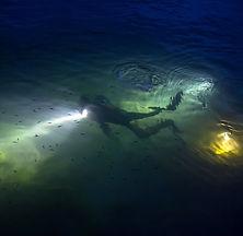 Night Dive_edited.jpg