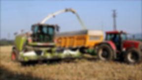 custom corn silage harvesting