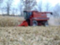 high moisture corn harvesting