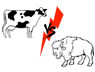 Buffalo vs. Cow Milk