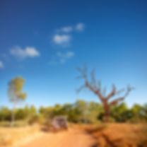northern-australiaiStock_000011697090XSm