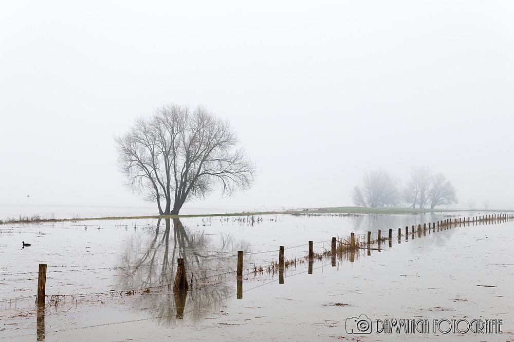 Afgelopen week was het hoog water in Nederland, zo ook in Werkendam. De uiterwaard langs de Merwede staat onder water, maar in combinatie met de mist geeft het een prachtig beeld.