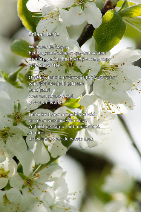 Stilaan lente
