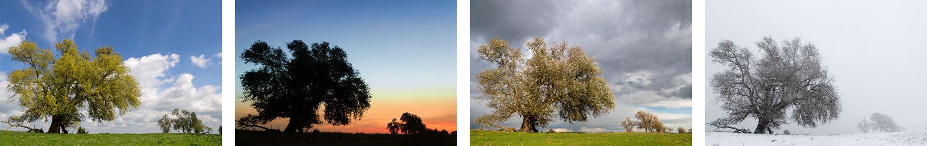 Vierluik seizoenen van een wilg