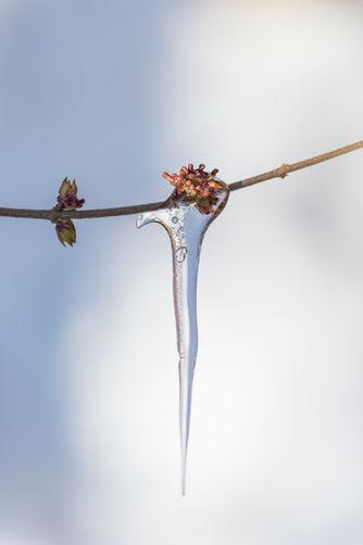 Bevroren voorjaar