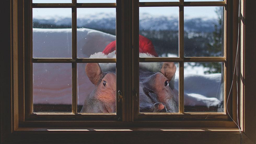christmas_hippo_01.jpg