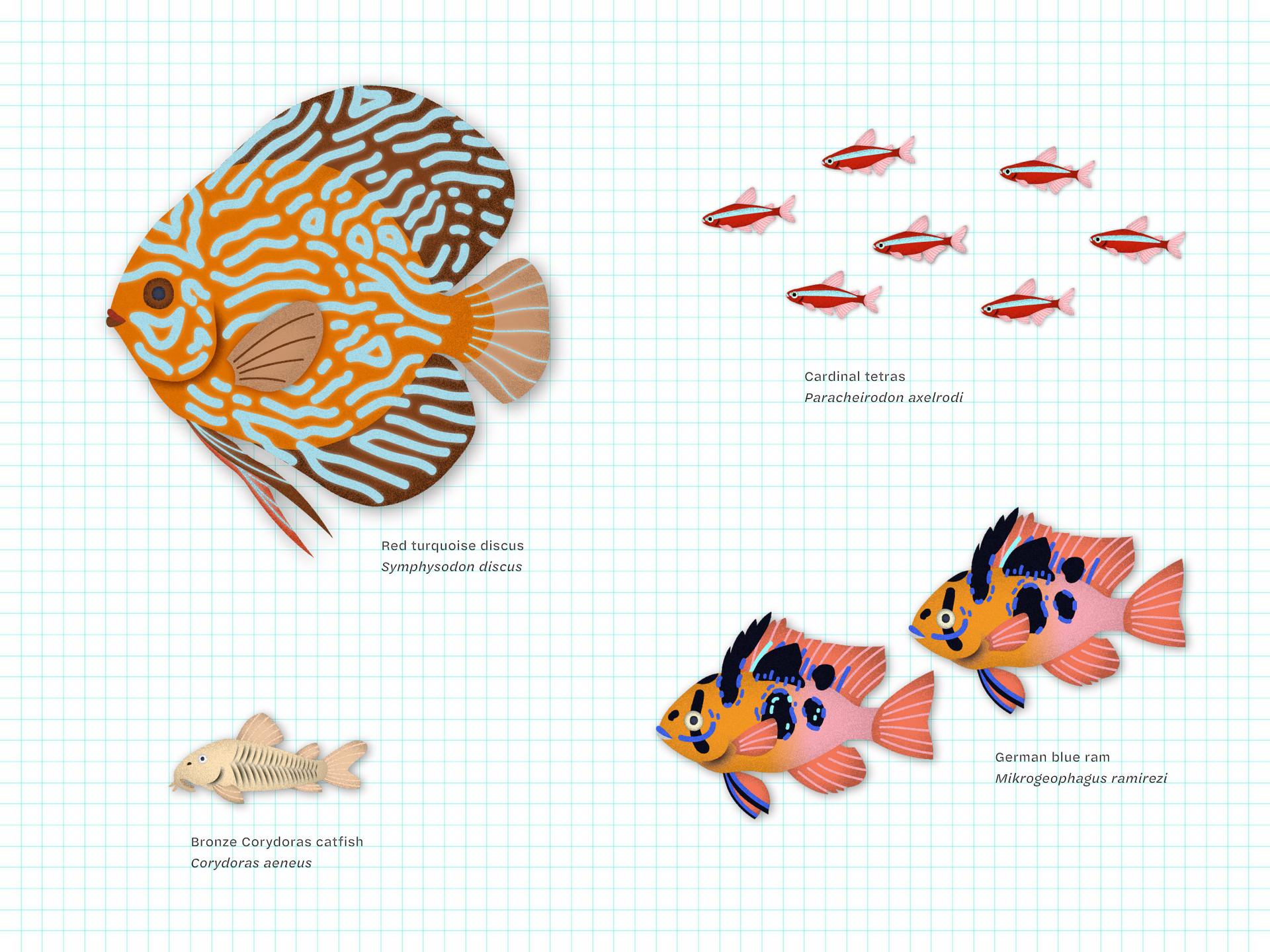 triet-pham_aquarium-fish-illustration-01