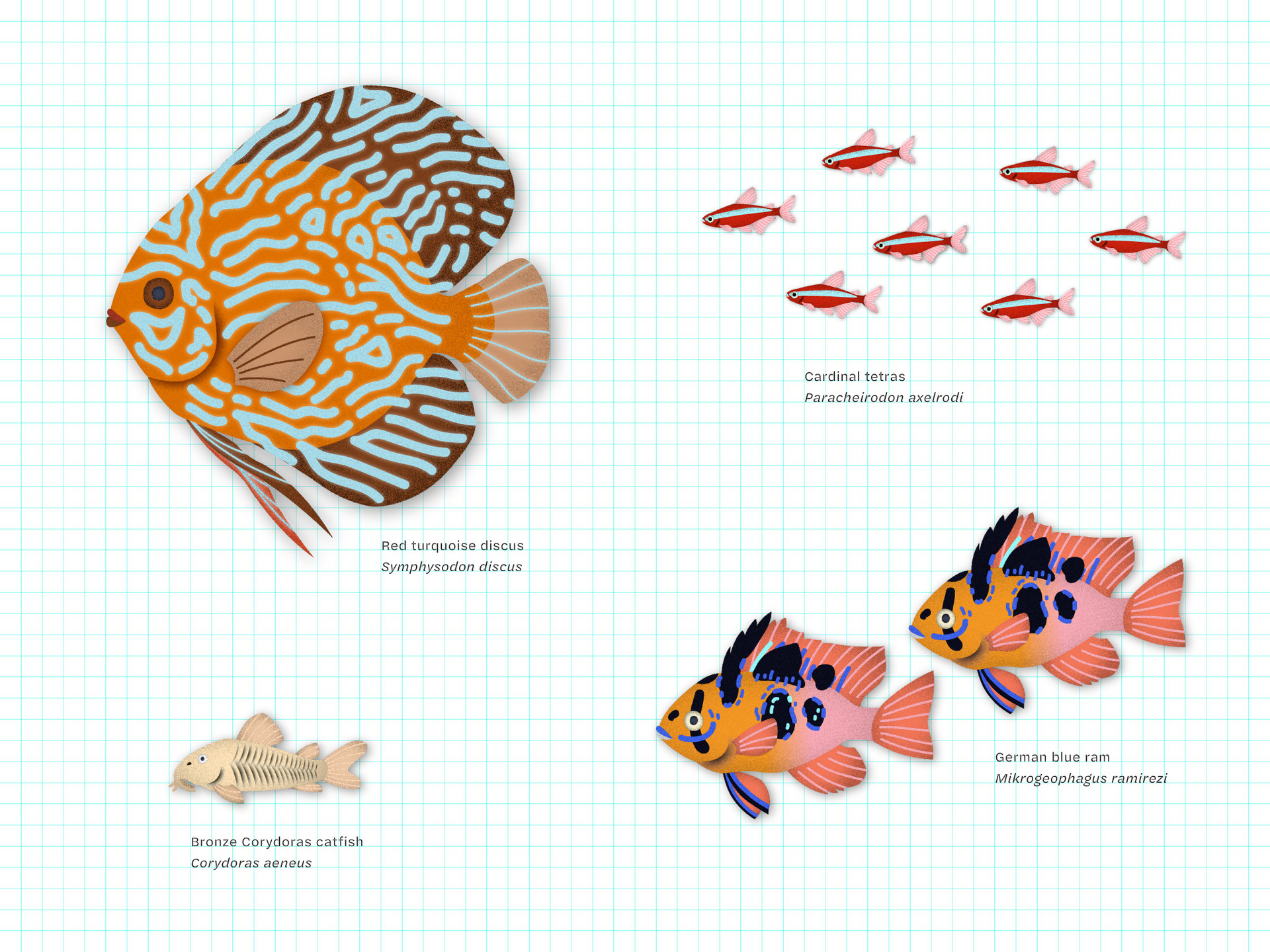 triet-pham_aquarium-fish-illustration-01