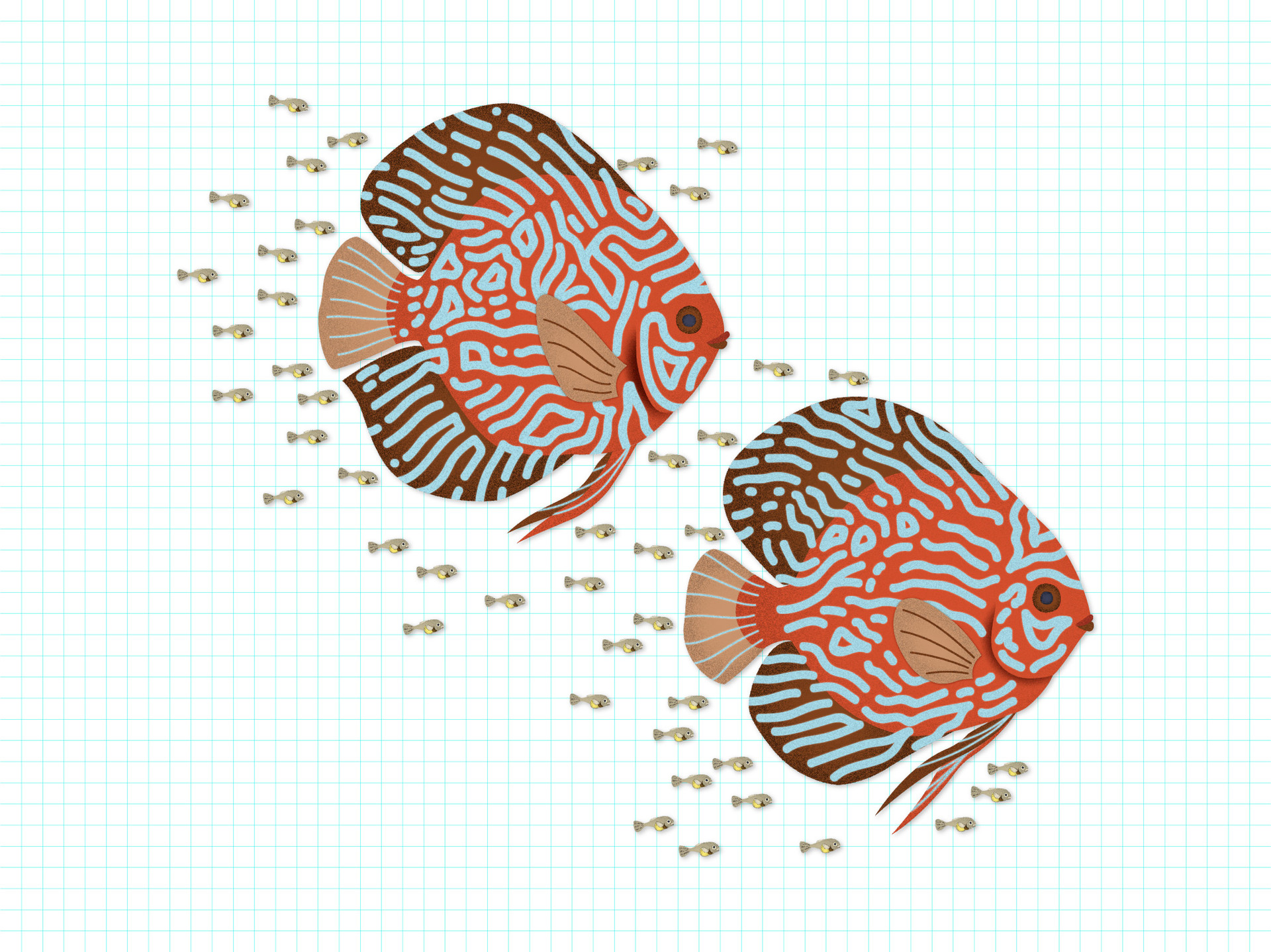 triet-pham_aquarium-fish-illustration-05