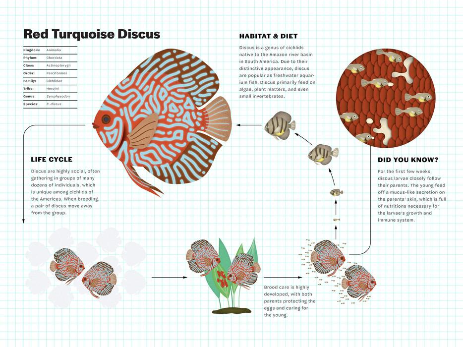 triet-pham_aquarium-fish-illustration-02