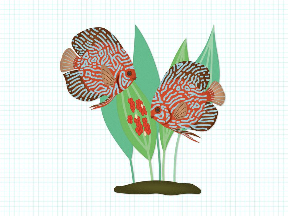 triet-pham_aquarium-fish-illustration-04