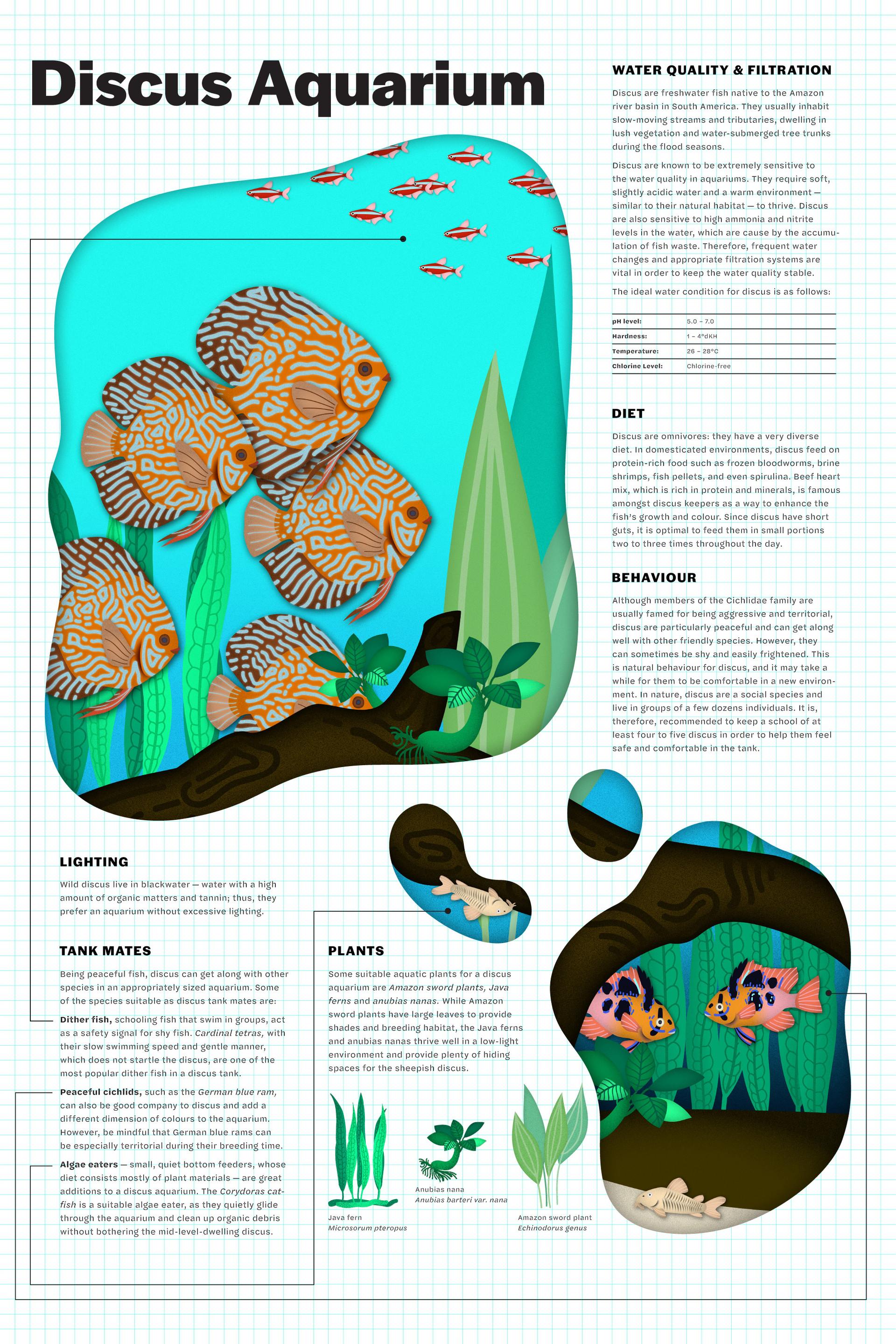 triet-pham_aquarium-fish-illustration-03