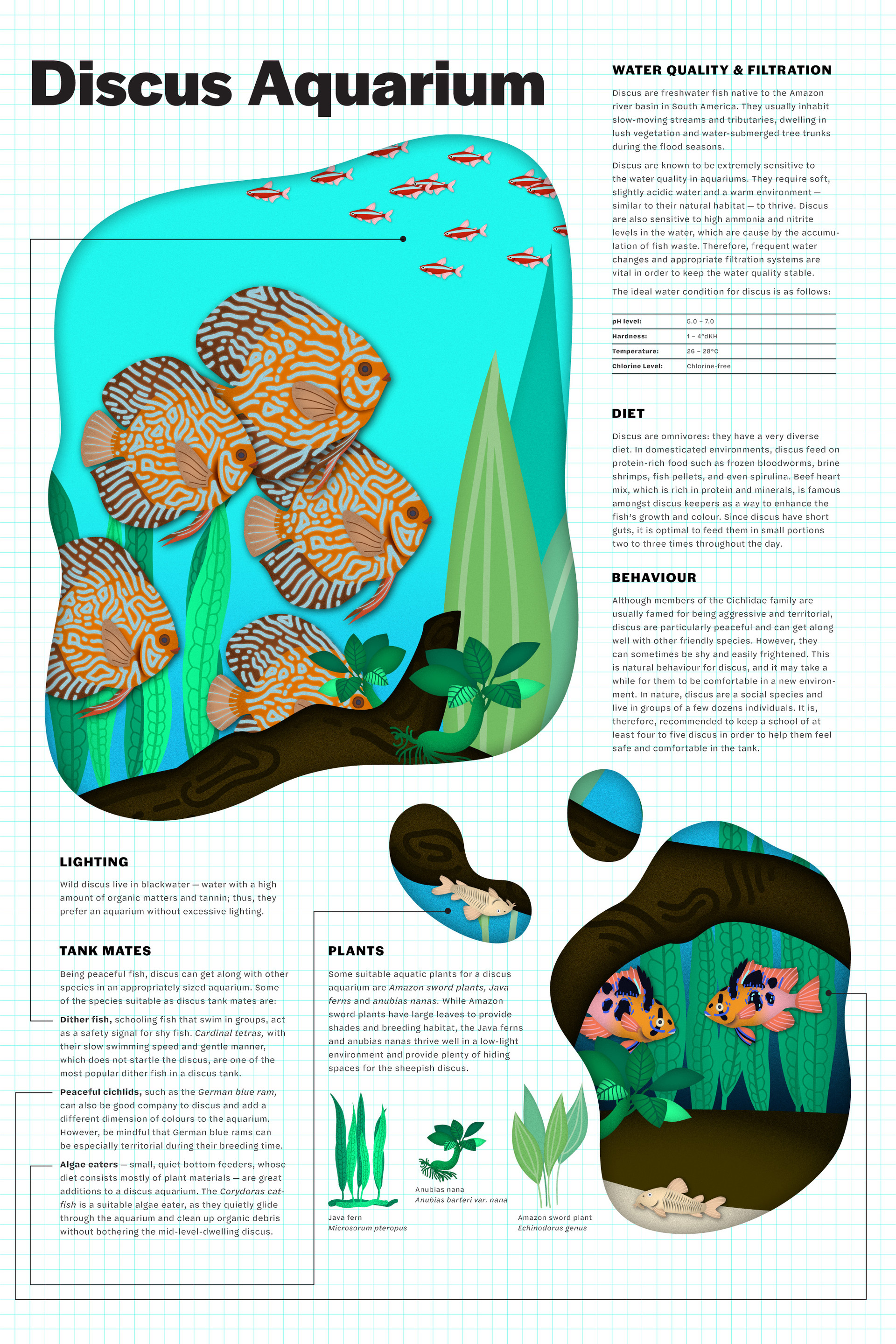 triet-pham_aquarium-fish-illustration-03