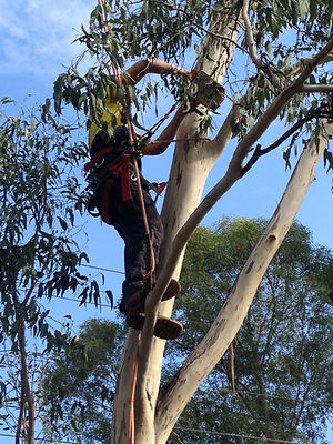 Tree Service - Lake Macquarie, NSW - Tree Pruning - Professional Tree Removals