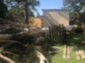 Fallen Tree - Central Coast, NSW - Professional Tree Removals