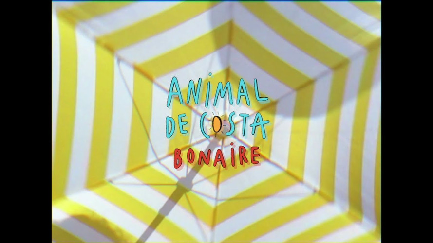 Animal de Costa - Bonaire
